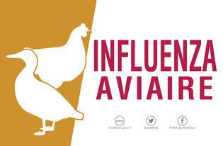 L'influenza aviaire est malheureusement de retour