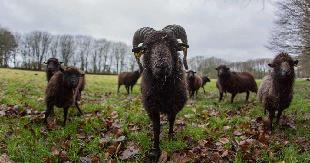 Chantier participatif : clôture pour moutons