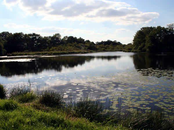 L'étang du Roz